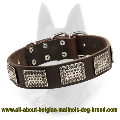 Belgian Malinois Leather Dog Collar With D-ring