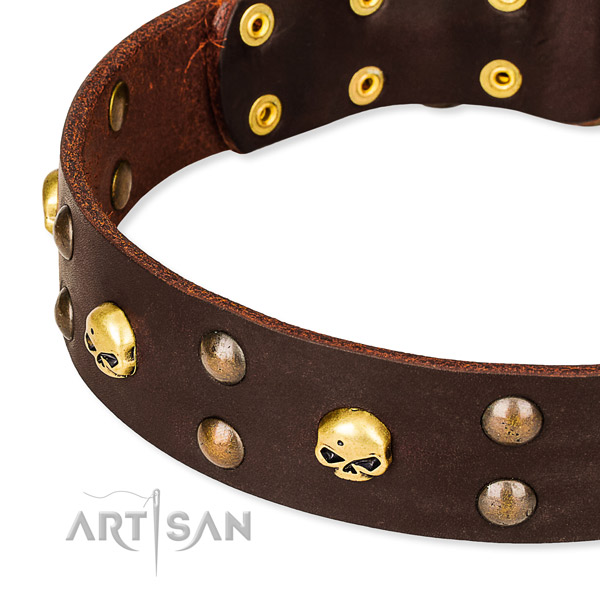 Daily leather dog collar for stylish walks