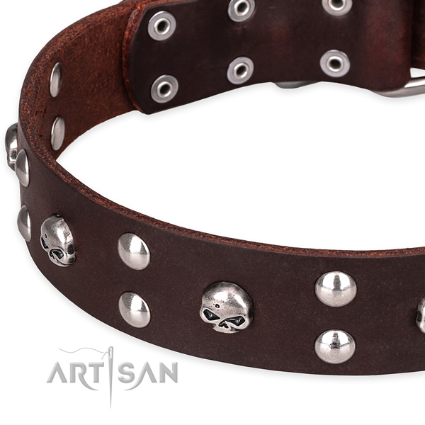 Everyday leather dog collar with elegant embellishments