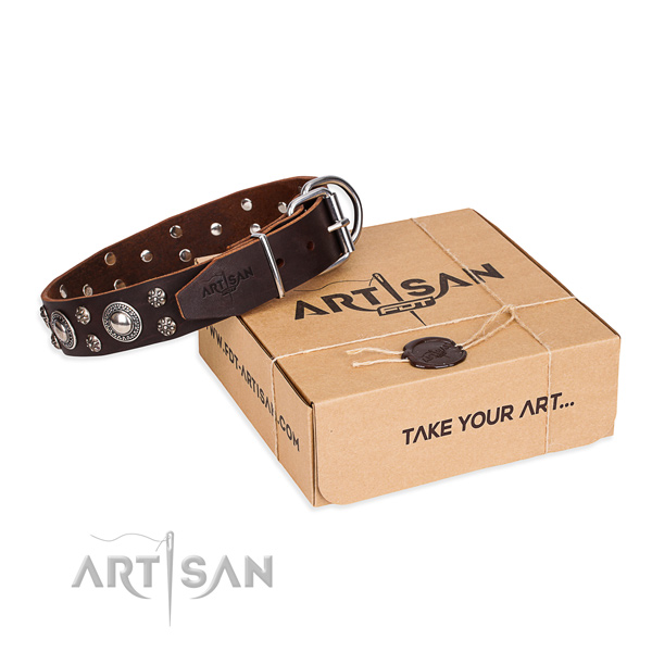 Casual leather dog collar with astonishing studs