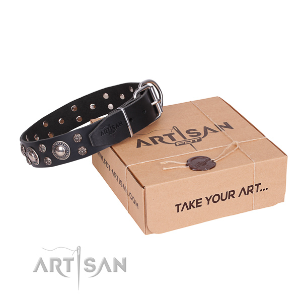 Everyday leather dog collar with astounding adornments