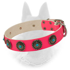 Extravagant Belgian Malinois Leather Collar with Blue Stones Design