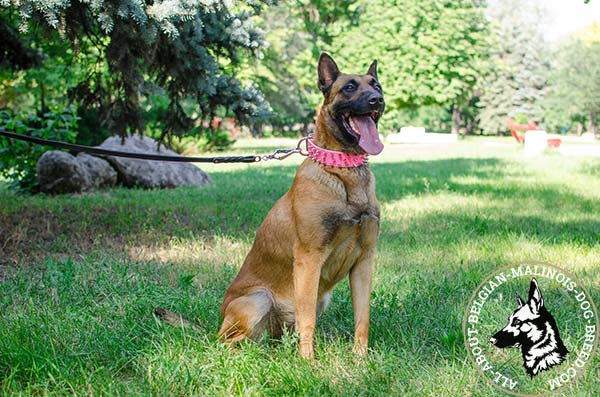 Adjustable pink Belgian Malinois leather collar
