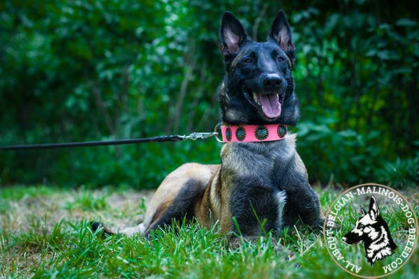 Pink Belgian Malinois collar with blue stones