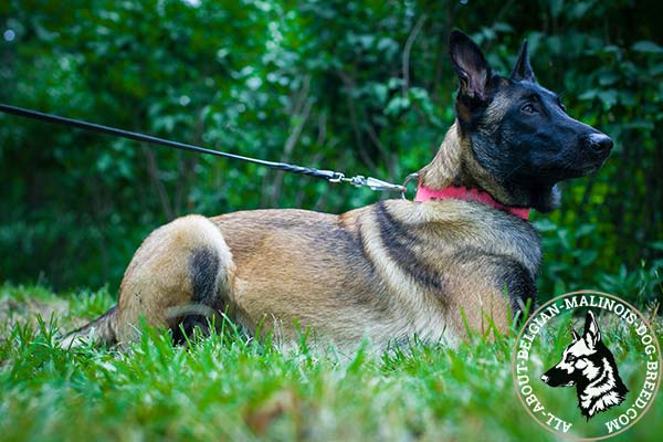 Excellent for walking Pink Belgian Malinois collar