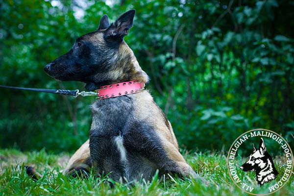 Pink Belgian Malinois leather collar with rounded edges