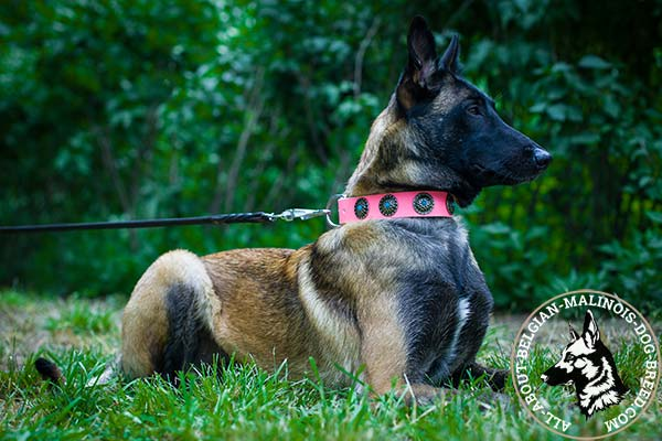 Pink Belgian Malinois collar reinforced with rivets