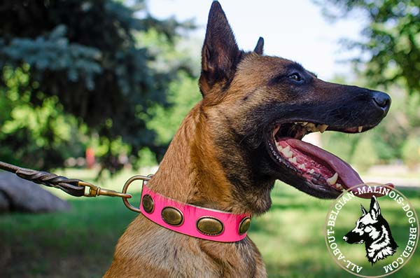 Pink Belgian Malinois collar with vintage oval plates