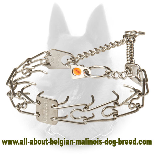 Firm Belgian Malinois Pinch Collar of Stainless Steel