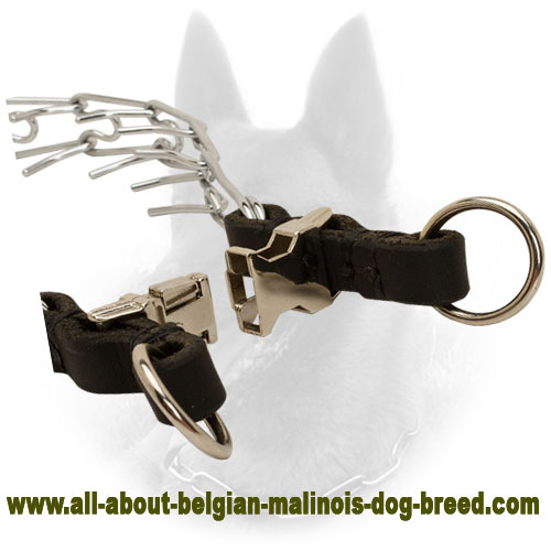 Solid Belgian Malinois Pinch Collar of Reliable Material