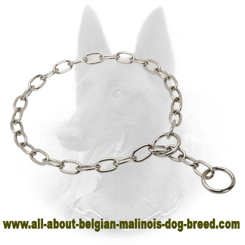 First Class Belgian Malinois Collar of Steel
