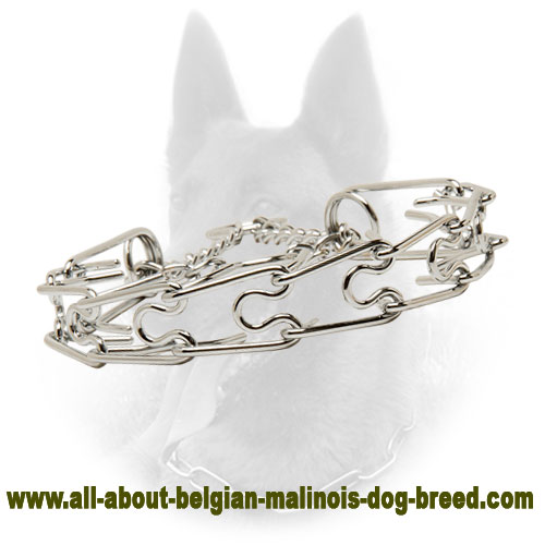 Awesome Belgian Malinois Pinch Collar of Chrome Plated Steel