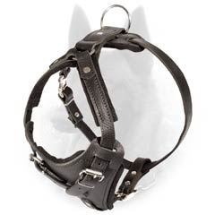 No-Doubt-Cool Belgian Malinois Leather Padded Harness