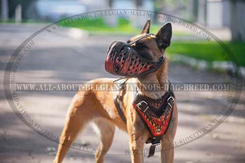 Belgian Malinois Leather Painted Dog Harness For  Training