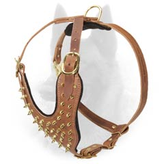 Stylish Walking Leather Belgian Malinois Harness Decorated with Brass Spikes