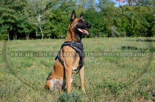 Hand Painted Leather Dog Harness For Belgian Malinois Walking