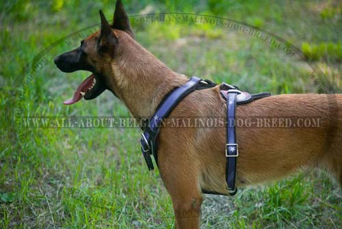 Adjustable Leather Belgian Malinois Harness Hand Painted with American Flag
