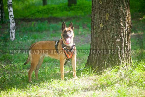 Leather Belgian Malinois Harness Decorated with Painted Flames