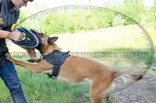 Comfortable Nylon Belgian Malinois Harness for Effective Dog Training