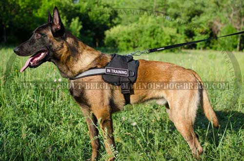 Dog Training Equipment: Nylon Belgian Malinois Harness with Reflective Front Strap
