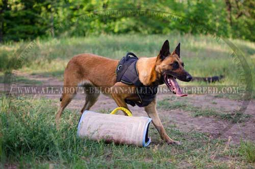 Strong and Durable Nylon Dog Harness for Belgian Malinois Training Sessions