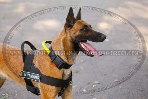 Professional Nylon Belgian Malinois Harness with Side Patches