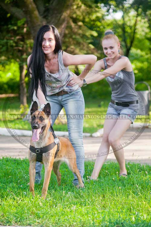 Nylon Belgian Malinois Harness for Training, Tracking and Pulling