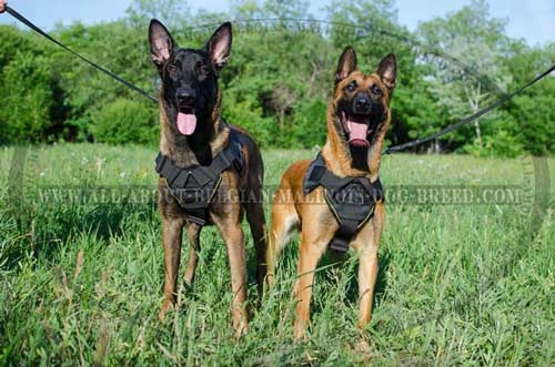 Strong Nylon Dog Harness for Belgian Malinois Tracking and Pulling