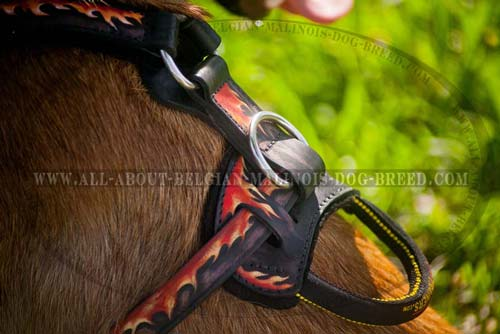 Exclusive Belgian Malinois Dog Breed Leather Harness For Family Activities