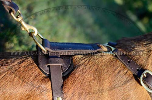 Brass D-Ring on Tracking Padded Leather Dog Harness for Lead Attachment