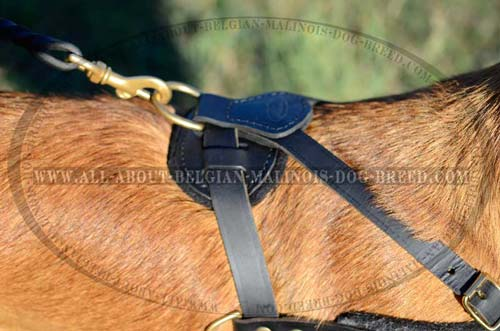 Brass D-Ring on Back Pad of Leather Dog Harness for Leash Attachment