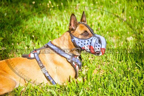 Comfy Belgian Malinois Dog Harness For Active Training