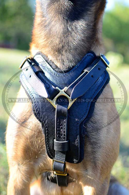 Felt Padded Chest Plate of Fancy Design Leather Dog Harness