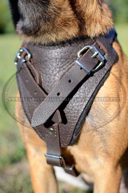 Thick Felt Padded Chest Plate of Training Leather Dog Harness