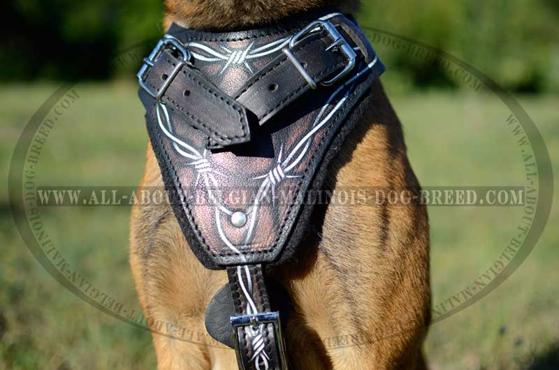 Chest Plate of Harness Leather Barbed Wire Painted big extreme agitation belgian malinois dog harness with cool barbed wire dog harness at bayanpartner.co