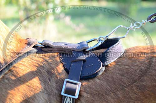 Solid Nickel Plated D-Ring on Walking Leather Dog Harness