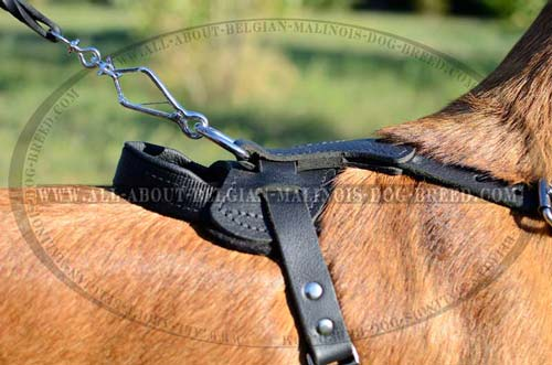 Nickel Plated D-Ring on Training Leather Dog Harness for Lead Attachment