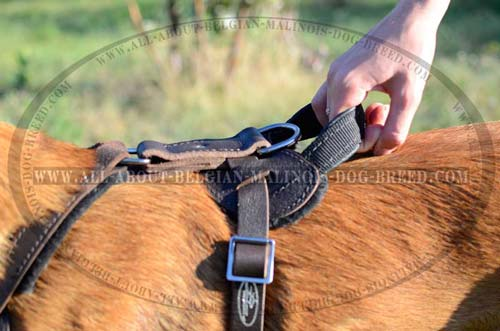 Duly Stitched Handle on Training Leather Dog Harness
