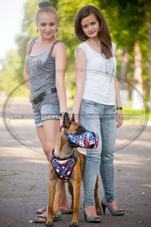 Exclusive Belgian Malinois Dog Harness With American Pride Painting