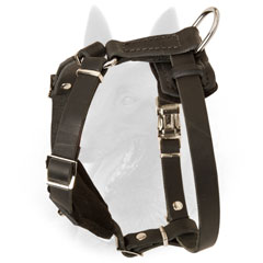 Safe and Comfortable Belgian Malinois Harness for Puppies