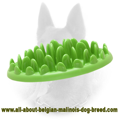 Grassy Plate Small Plastic Belgian Malinois Feeder