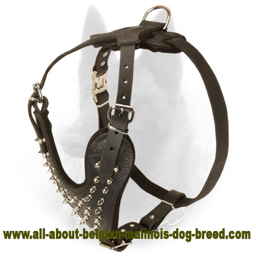 Gorgeous Spiked Leather Belgian Malinois Harness for Walking