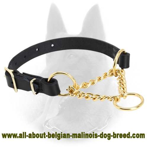 Trendy Brass Martingale Belgian Malinois Collar 'Smart Control' - 1/6 inch (4 mm)
