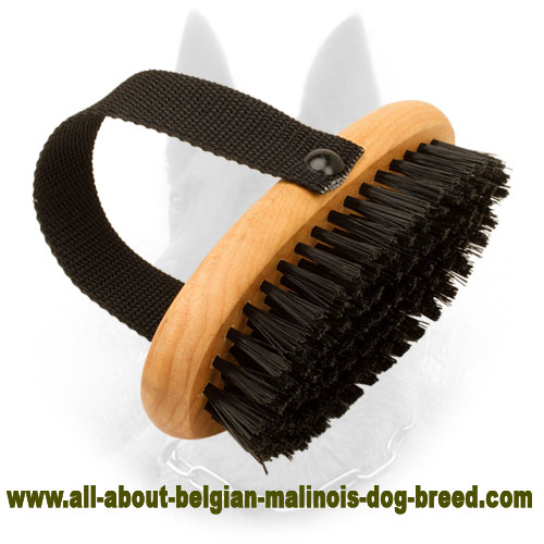 Bristle Belgian Malinois Brush for Everyday Combing