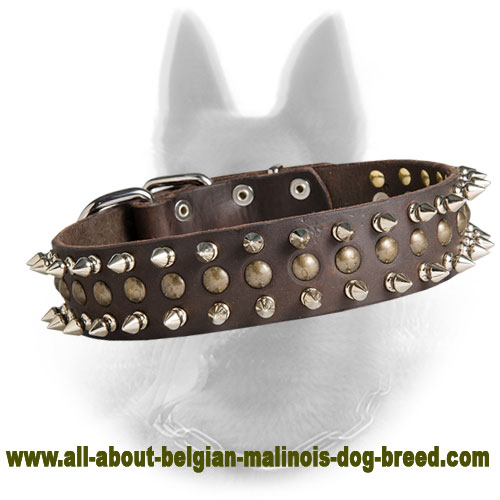 New Leather Belgian Malinois Collar Decorated with 2 Row Spikes and 1 Row Brass Studs