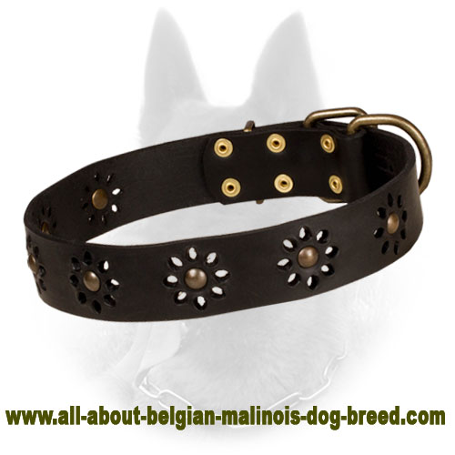 'Spring mood' Leather Belgian Malinois Collar for Stylish Walking