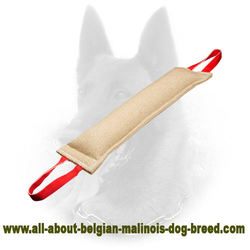 Super Long Belgian Malinois Bite Tug of Jute