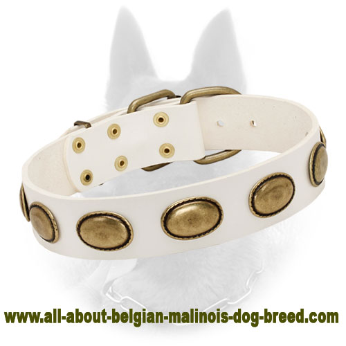 Leather Belgian Malinois Collar in White for Walking in Style