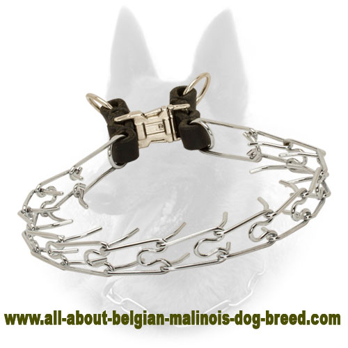 Firm Belgian Malinois Pinch Collar of Chrome Plated Steel - 1/6 inch (3.99 mm)