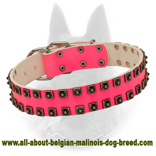 Extravagant Pink Belgian Malinois Leather Collar with Studs
